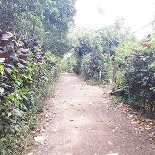 Farm Lot For Sale Anuling Mendez Cavite