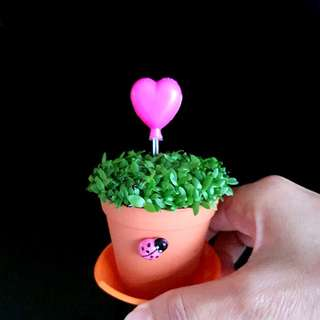 Happy plant for office & CNY Gift!
