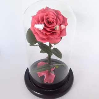 Preserved Flower - Glass Dome - The Enchanted Rose (Coral) | Valentine's Day | Birthday Present | Gift Box | Rose | Wedding | BNIB | 5% OFF