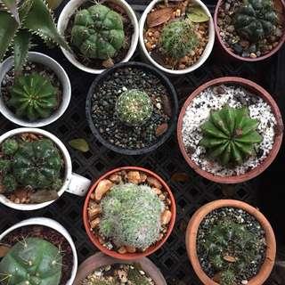 Succulent/Cactus🌵