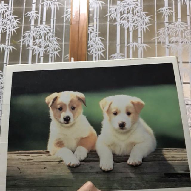 可愛狗狗 500片拼圖