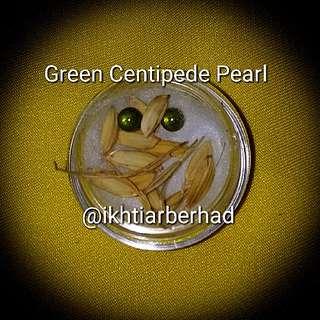 Buntat Lipan Hijau/ Green Centipede pearl