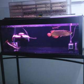 522 Fish Tank With Stand