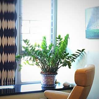 Oriental plant pot