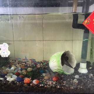 FREE 2Ft fish tank with fishes