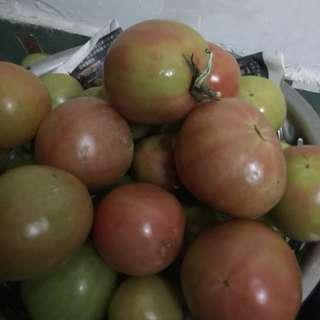有機番茄(自家種)