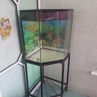 Fish Tank Corner 5 Sided