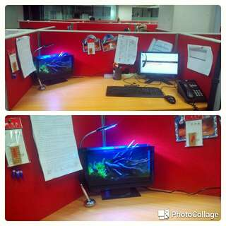 Aquarium Cantik Model Lcd