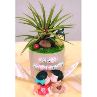 Valentine's Day Gift For Loved One Air Plant
