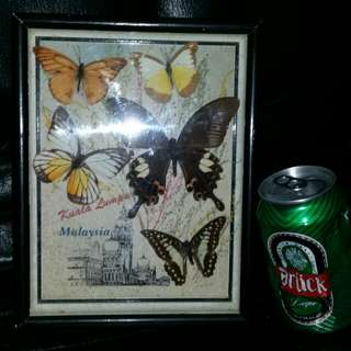 蝴蝶標本,馬來西亞,屯門交收,或25$by mail。Butterflies with wood frame, trade in.Tuen Mun, or 25$ by mail