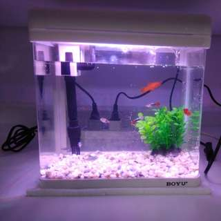 Fish tank and fish etc. full set at cheap price