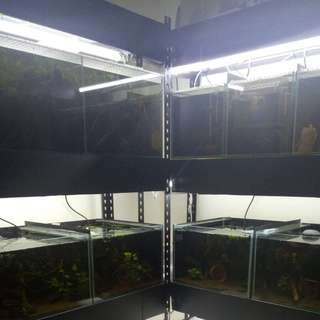 Fish Tank Racking With Heavy Plywood