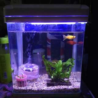Fish Tank (with light)