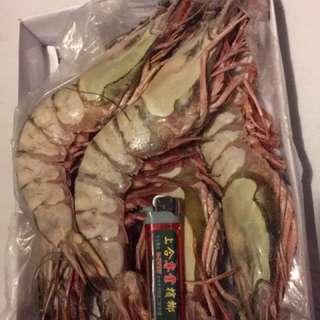 斑節蝦(虎蝦)