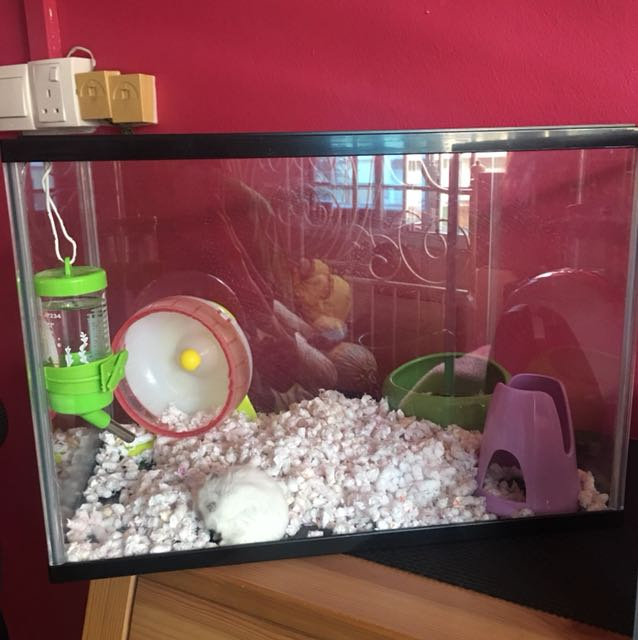 Wonderbaar Hamster Cage/aquarium on Carousell BE-05
