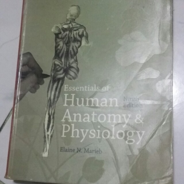 Human Anatomy And Physiology By Elaine Marieb Textbooks On Carousell
