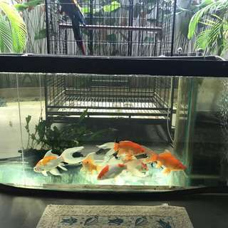 SELLING 4ft curved Fish Tank