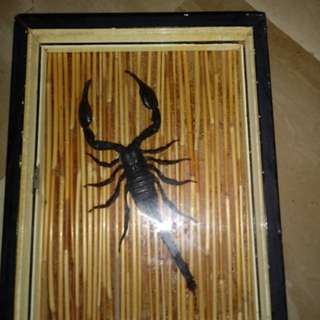 SCORPION dead & framed