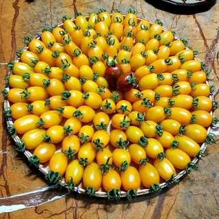 Organic Cherry Tomatoes P100/250g