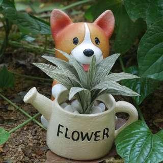 Succulent in corgi pot.