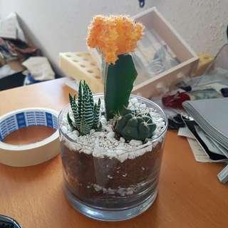 Handmade Tabletop Cactus Garden