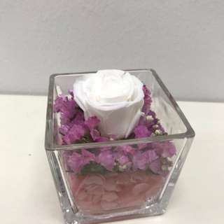 Purity (Preserved flower)