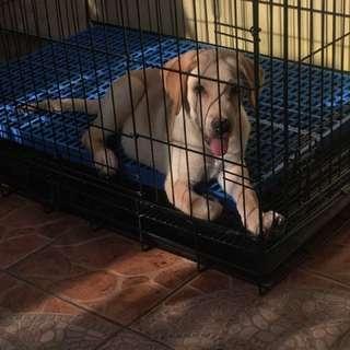 Dog Cage (Large)