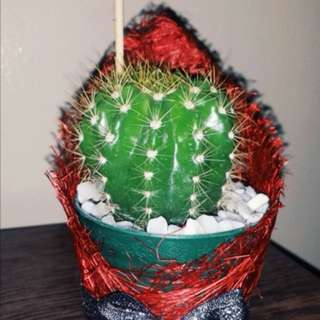 Cactus for Valentine's day