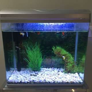 Fish Tank (44x38x25cm) with water pump & LED light