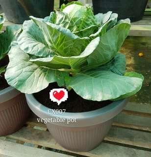 88 veg pot, bao cai