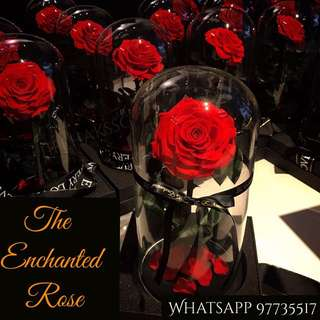 [Valentine's Day Gifts / Flowers / Roses for HER] ENCHANTED ROSE IN GLASS DOME 🌹 Real Preserved Ecuadorian Rose 🌹 lasts Up To 5 Yrs With Minimal Care