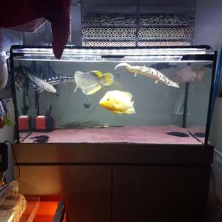 3ft tank with cabinet