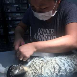 Professional cat grooming services