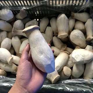 A級杏鮑菇//1000克//100%有機產地直送