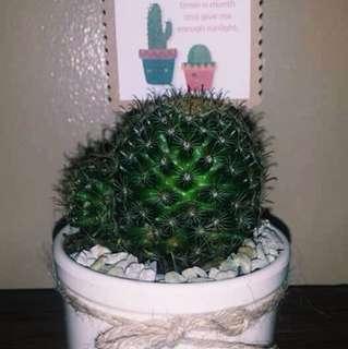 Cuztomised cactus 🌵
