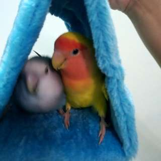 Snuggly Hammock for Small Parrots like lovebirds, parrotlets, budgies etc