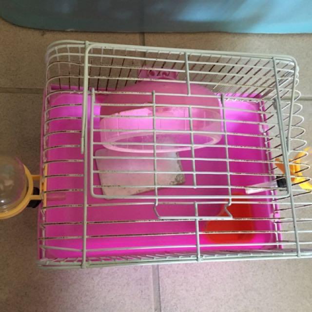 倉鼠🐹鼠籠