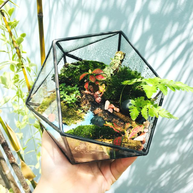 Geometric Terrarium Rainforest Series Hex Gardening On Carousell