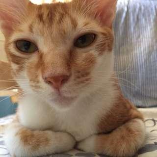 我家愛貓貓貓