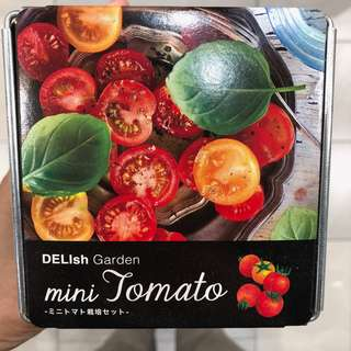 Mini Tomato / Lycopersicon Esculentum Delish Garden Cultivation Kit