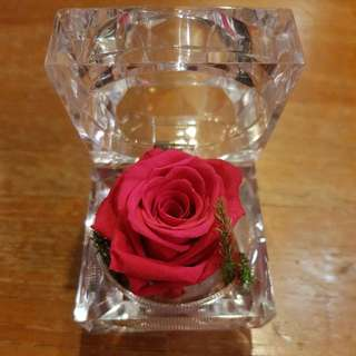 Preserved Rose (hot pink/champagne/passion red)