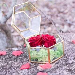 Real preserved Rose terrarium