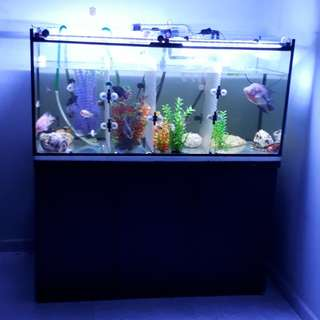 4 Ft Fish Tank with cabinet