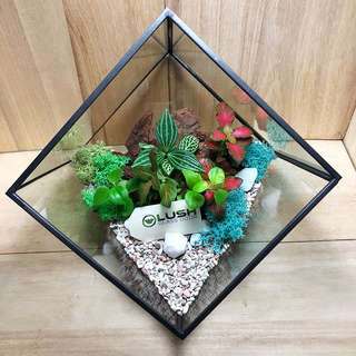 Perfect Gift for Valentine's Day/ V Day/ Valentine/ Christmas/ Xmas/ Birthday/ Congrats/ Farewell/ House warming/ Christmas/ Xmas - Real Mini Plant- Tropical RainForest in Square Geometric Terrarium NEW EDITION!