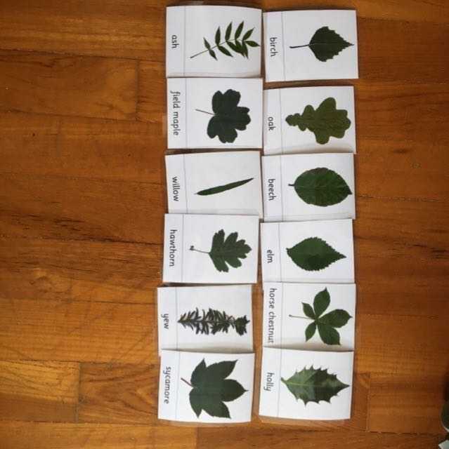 Flashcards - type of leaves