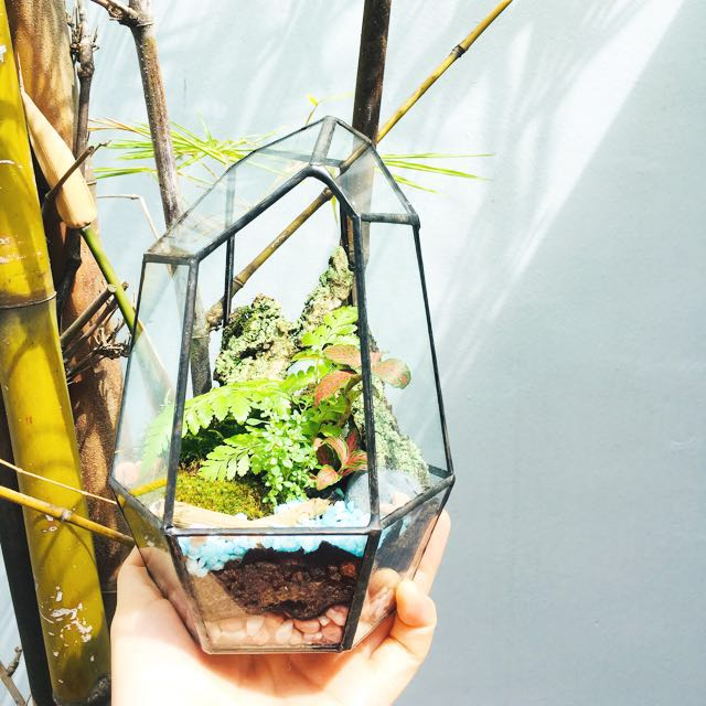 Geometric Terrarium Rainforest Series Jewel Gardening On Carousell