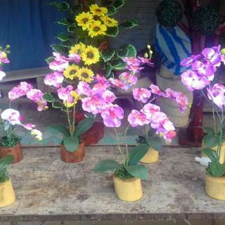 Pre order flower display