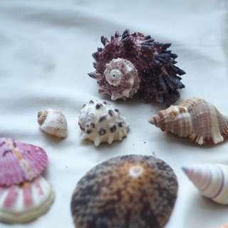 Assorted Shells [Sea Shell]