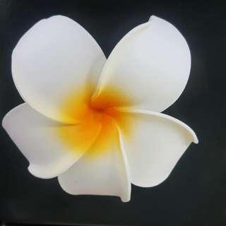 熱情夏威夷。花瓣。立體。磁鐵