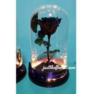 Beauty And The Beast Black Rose preserved